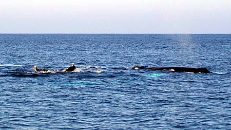 Birthday Humpbacks