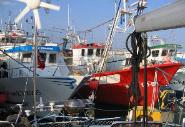 Squeezed in among the fishing fleet